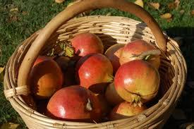 cesta con frutti di melograno