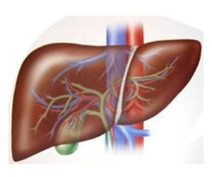 Ayurveda e salute del fegato